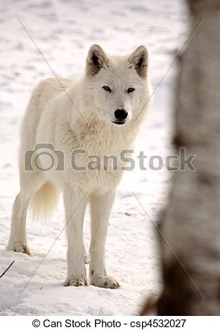 Arctic Wolf clipart outline howling Winter Arctic csp4532027 Wolf in