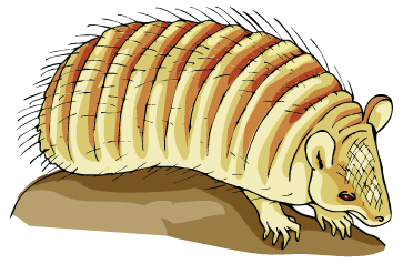 Armadillo clipart odd An Charango! from Instrument An