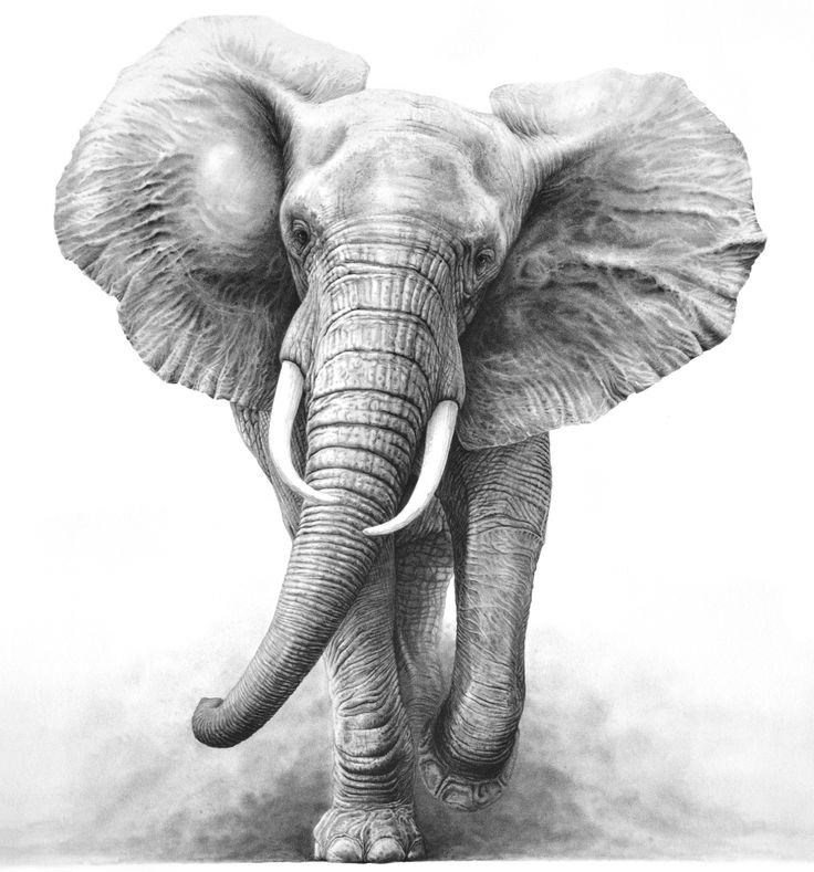 Asian Elephant clipart gray elephant Clip Pinterest best images Drawings