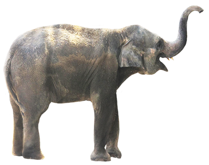 Asian Elephant clipart gray elephant PNG download Elephant free images