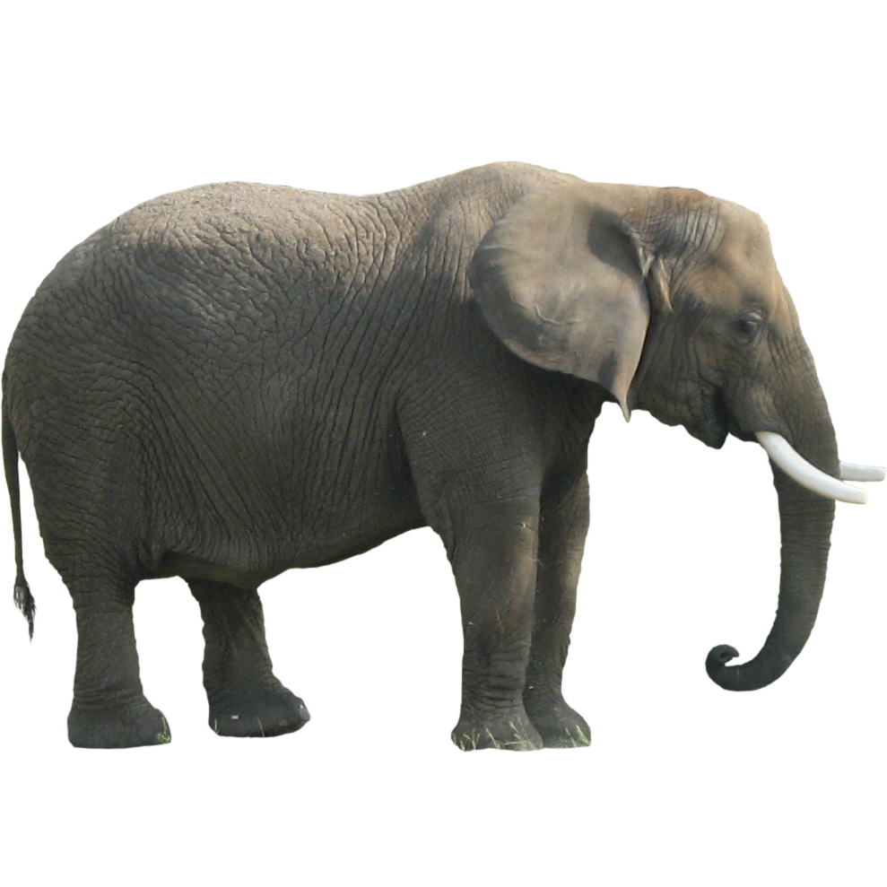 Asian Elephant clipart gray elephant Elephant All PNG Images Advertisement