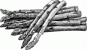 Asparagus clipart black and white Practica Technical Zone « clipart