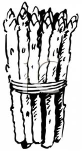Asparagus clipart black and white 164x300 Image: 12KB and collection