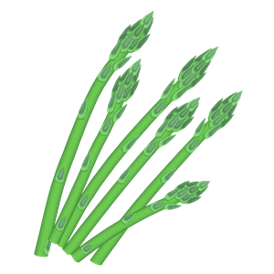 Asparagus clipart vector Clipart vegetable botany  food