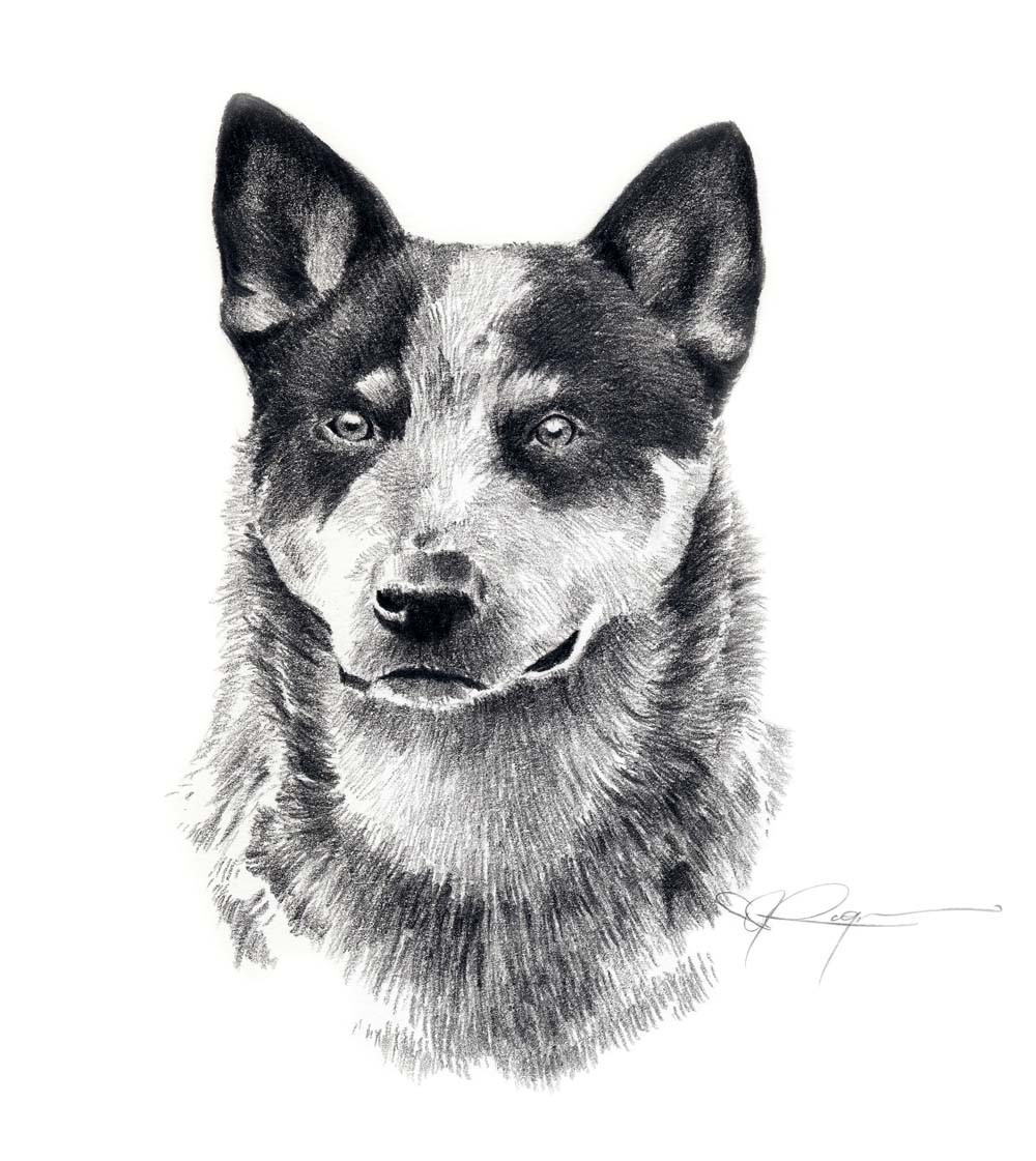 Australian Cattle Dog clipart Cattle J dog art by