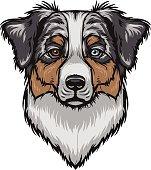 Australian Shepherd clipart Dog Shepherd Australian Australian