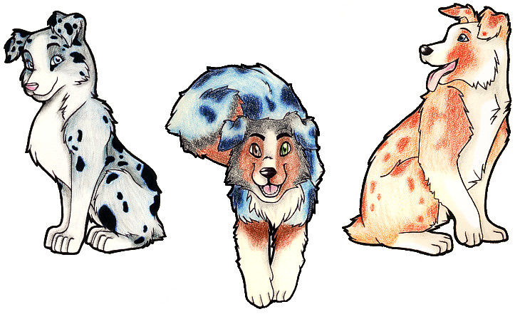 Australian Shepherd clipart Australian Shepherd Head Drawing By DeviantArt Australian on FigBeater