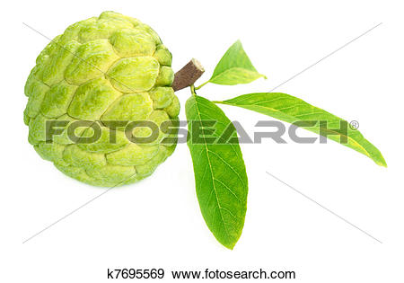 Sugar Apple clipart Of collection apple Clipart atis