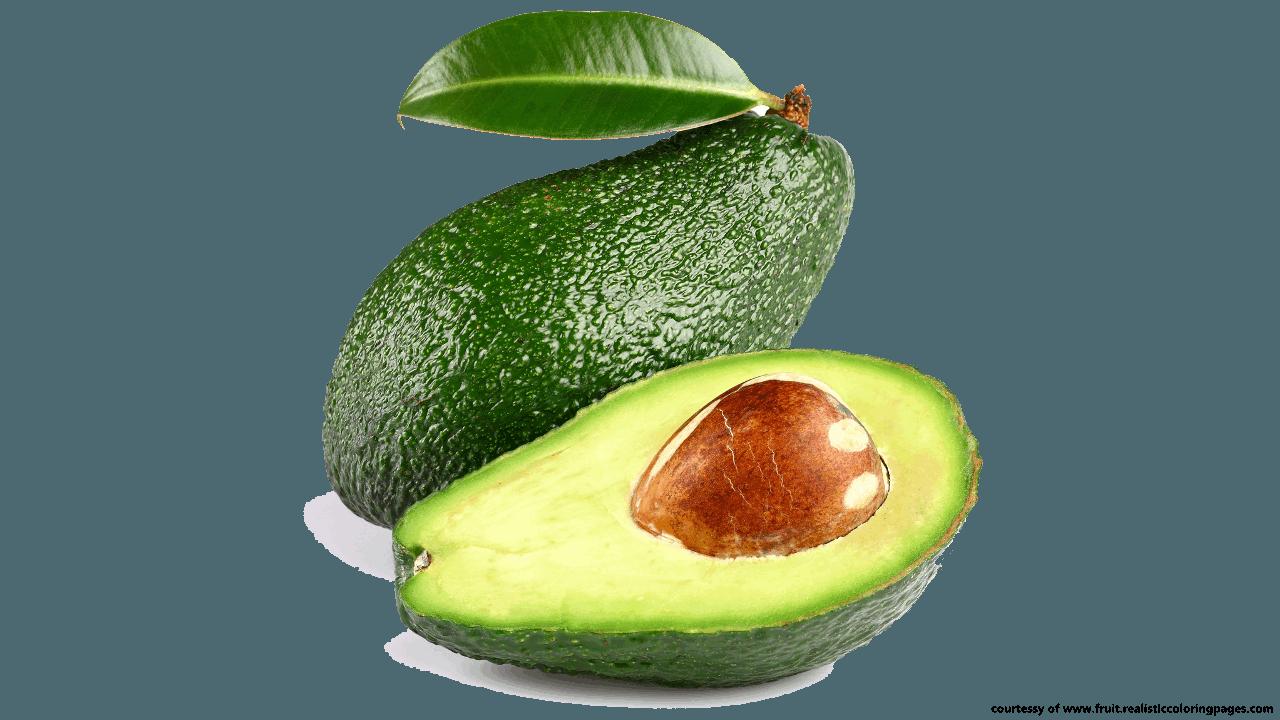 Avocado clipart coloring Clipart  clipart Fruit Names