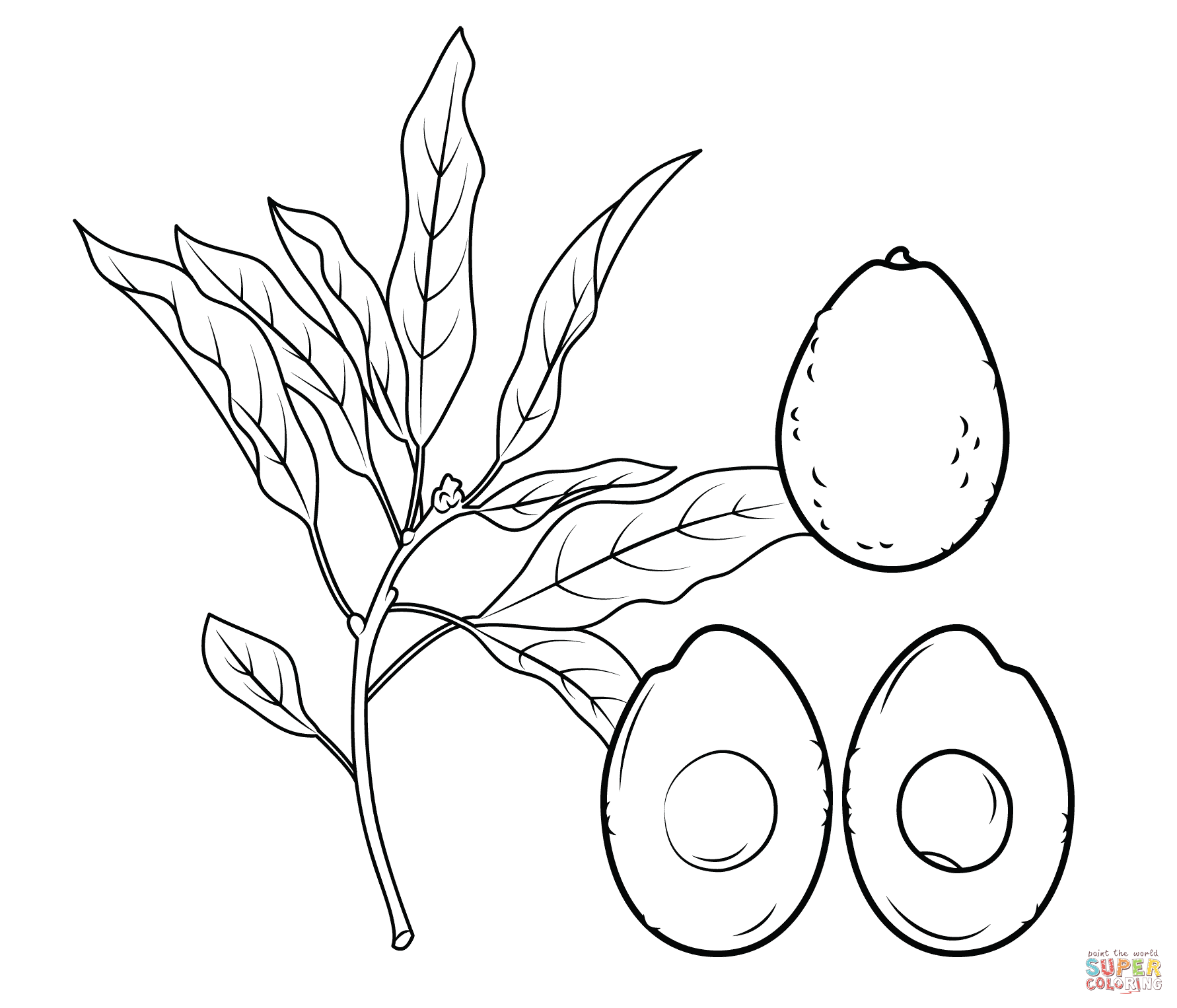 Avocado clipart coloring Free branch pages Avocado cross