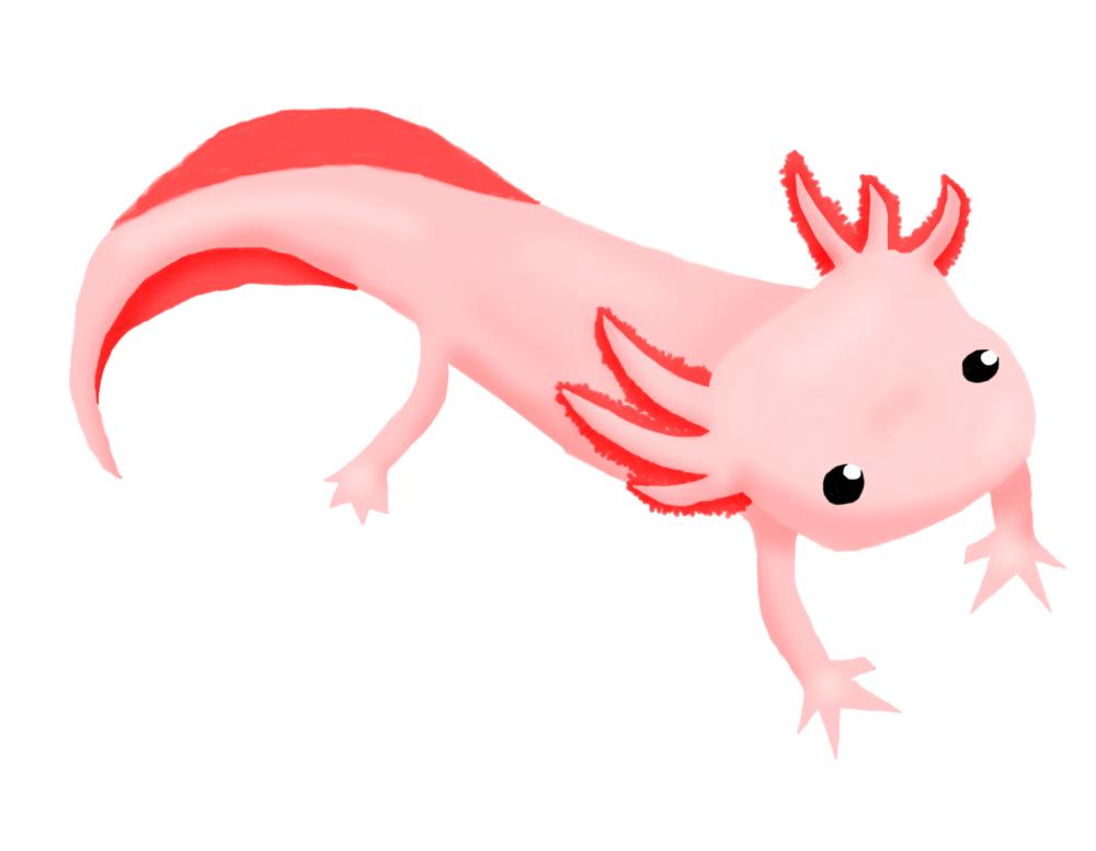 Axolotl clipart pink On petpet21 16 Axolotl by