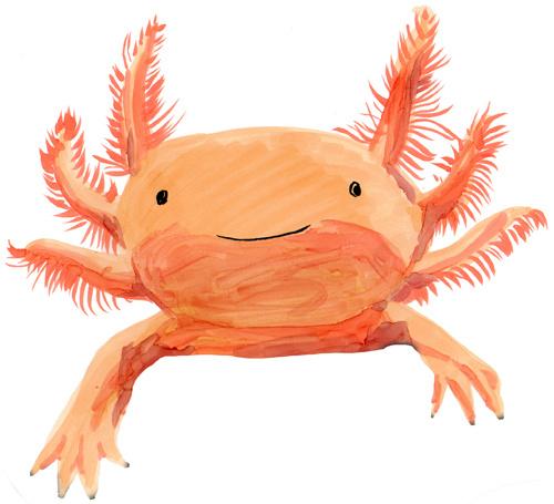 Axolotl clipart pink Chappell axolotl 2 Axolotl mexican