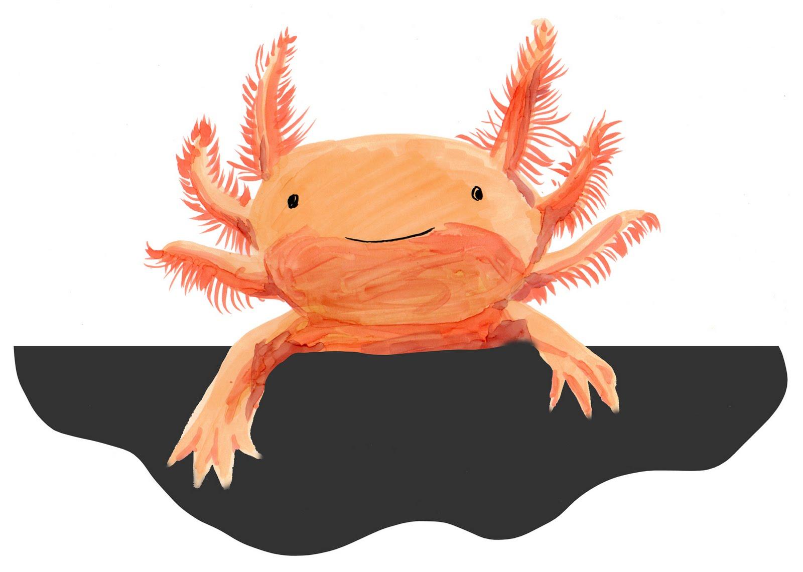 Axolotl clipart amphibian Axolotl Illustration Axolotl illustration photo#3