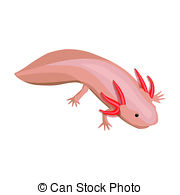 Axolotl clipart pink  royalty free Illustrations and