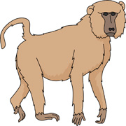 Baboon clipart brown monkey Illustrations baboon Graphics Free Art