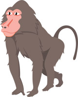 Baboon clipart brown monkey Graphics baboon Pictures Illustrations Kb