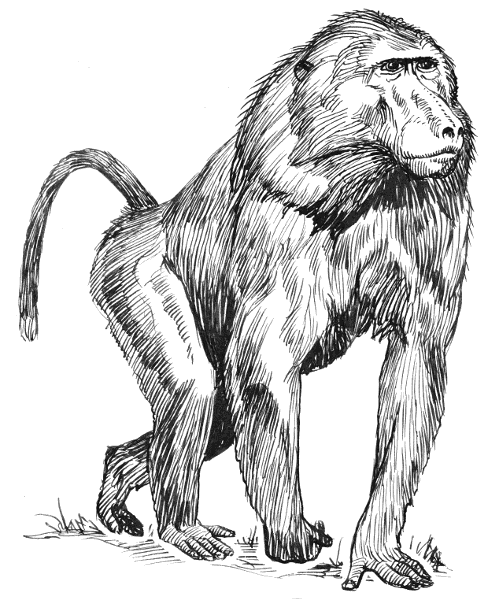 Baboon clipart brown monkey Clip Free Domain Art Baboon