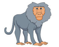Baboon clipart mandrill Free Graphics Art Illustrations Clipart