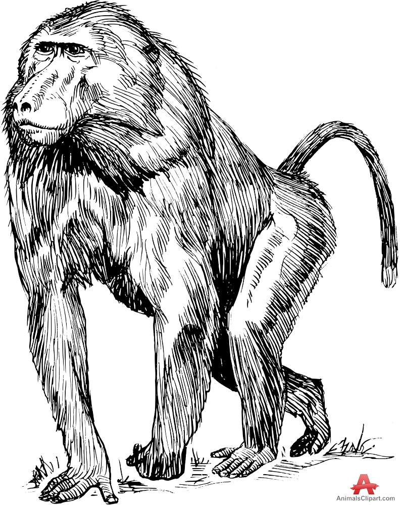 Baboon clipart black and white Baboon Free collection Drawing Clipart