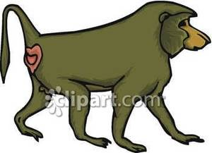 Baboon clipart cartoon Baboon Clipart Images Panda Baboon%20Clip%20Art