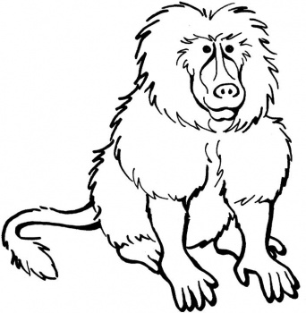 Baboon clipart cartoon Clipart  clipart cartoon Clipart