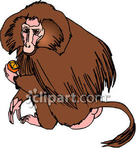 Baboon clipart cute Clipart Clipart Baboon Free Images