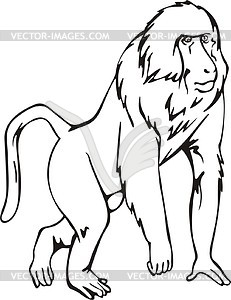 Baboon clipart drawing Baboon Clipart Images Panda 20clipart