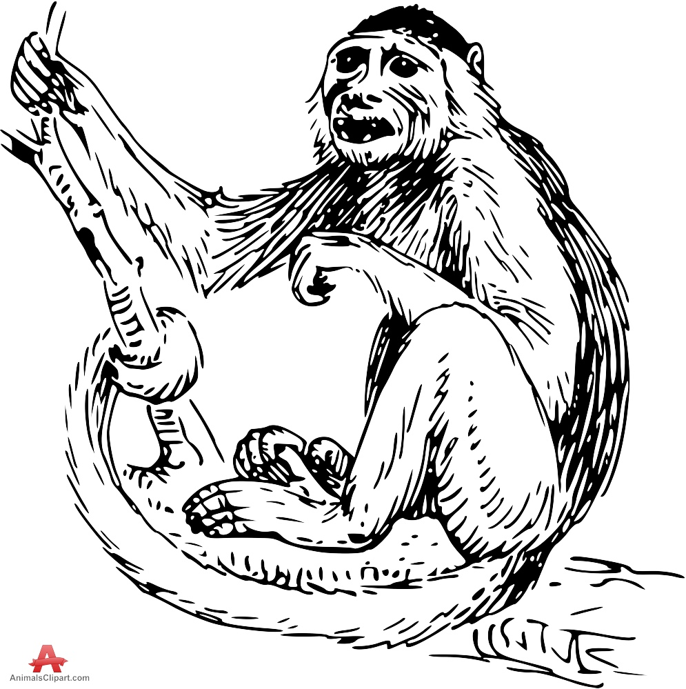 Baboon clipart drawing Of Monkey baboon keywords Clipart