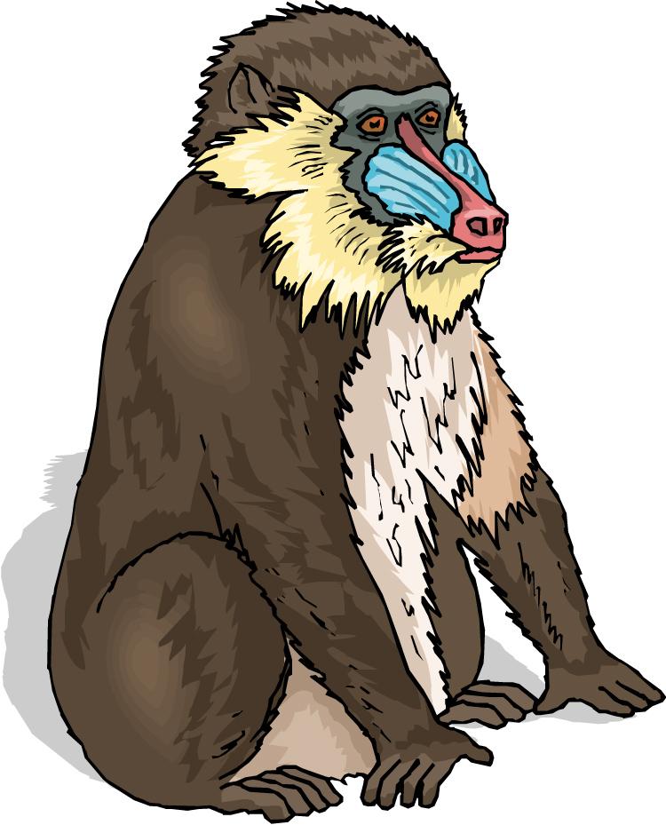 Baboon clipart teacher Teachers: ANIMAL clipart Ones: Baboon