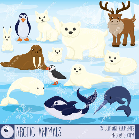Winter clipart winter animal Clipart arctic winter animal clipart