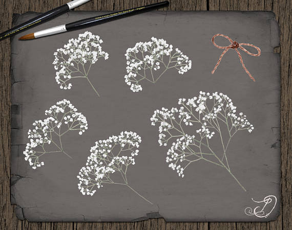 Baby's Breath clipart Breath file White Baby's Flowers