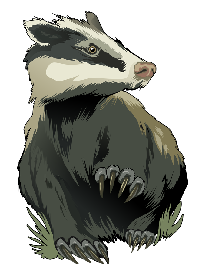 Badger clipart & Public your Search for