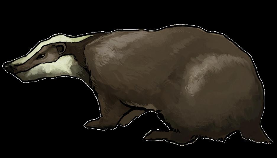 Brown clipart badger To Art Badger Public Clip