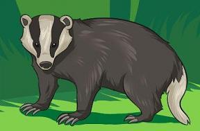 Badger clipart mascot Free Badger Clipart Badger