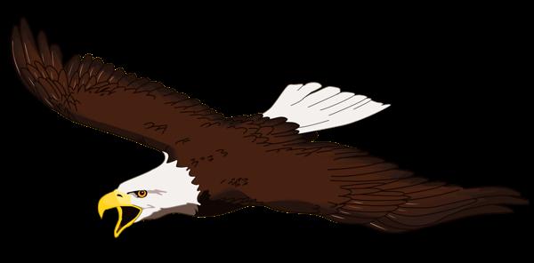 Bald Eagle clipart #9