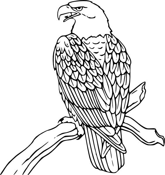 Book clipart eagle  Eagle clip svg vector