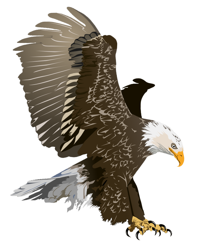 Bald Eagle clipart To use free Eagle Pictures