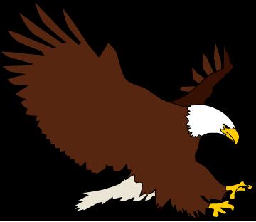 Bald Eagle clipart #3