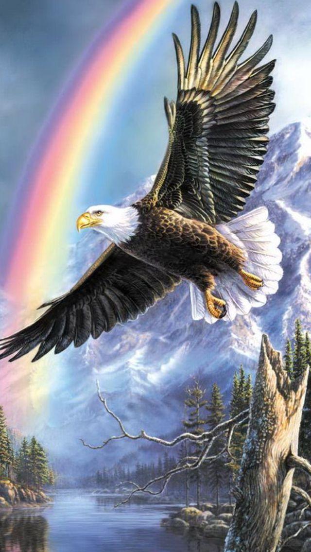 Bald Eagle clipart pagemaker On Eagle Pinterest ArtBald раскраски
