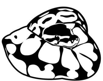 Ball Python clipart Download Ball clipart Ball Python