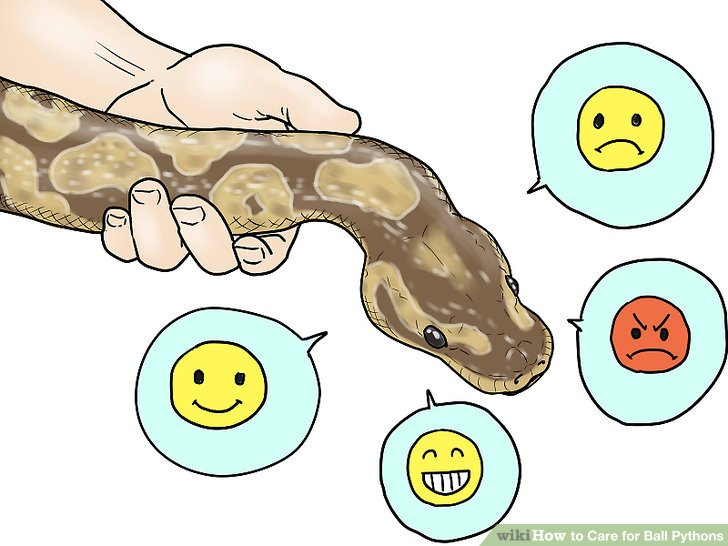 Ball Python clipart Ball 8 wikiHow Pictures) Image