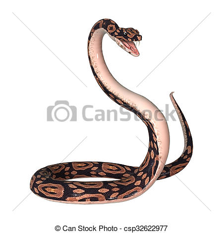 Ball Python clipart White a  rendering of