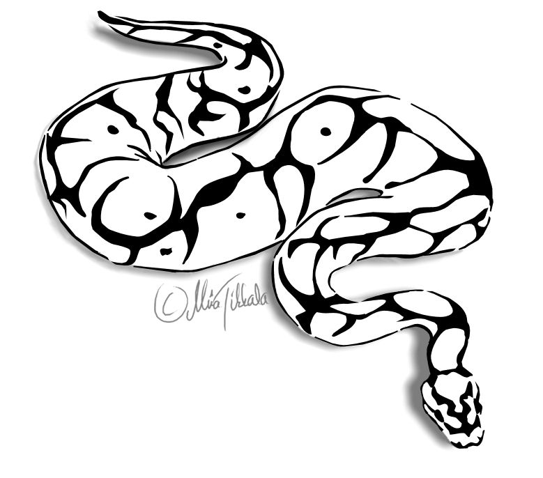 Ball Python clipart burmese python #17 clipart Download Ball Ball
