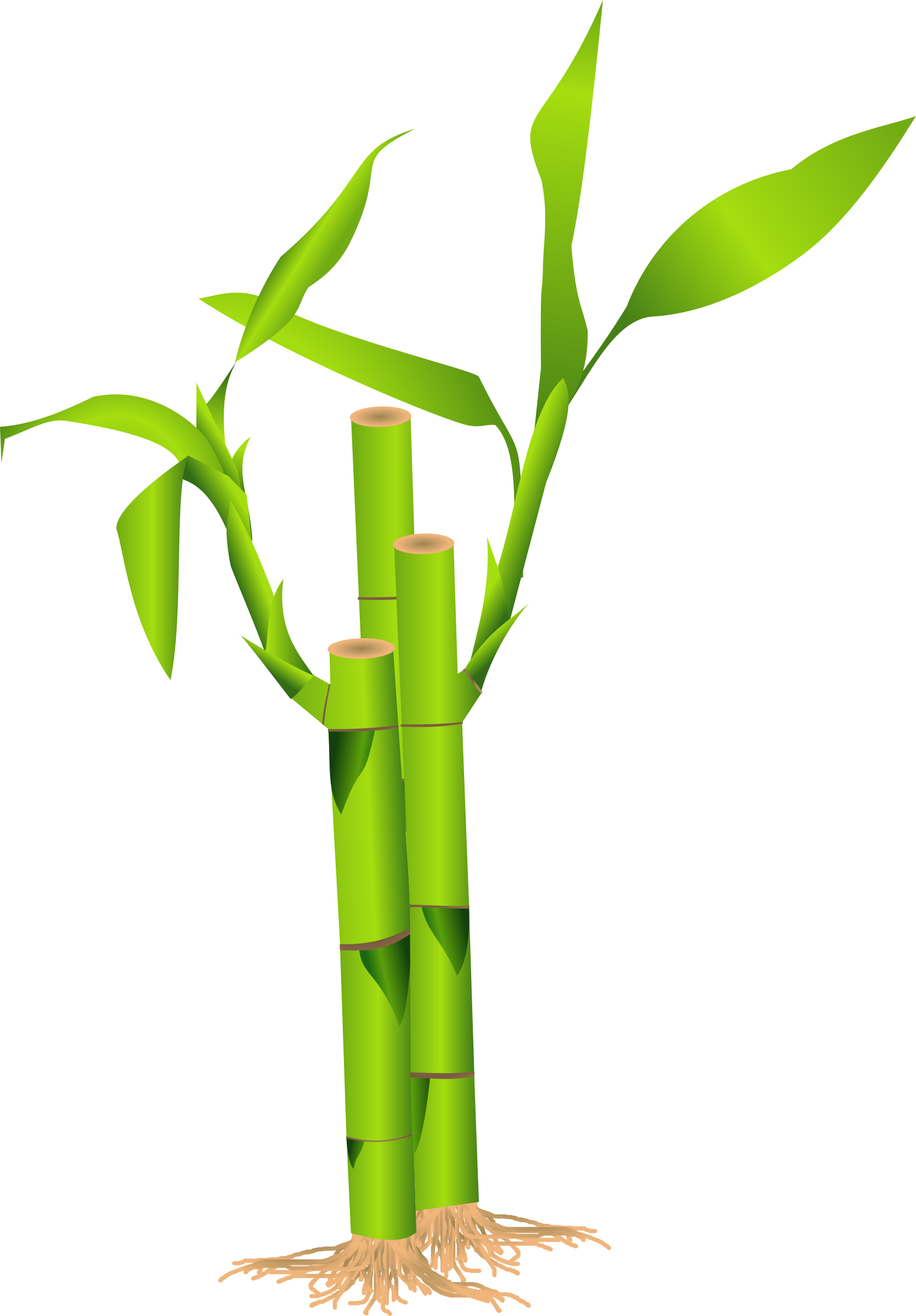 Bamboo clipart Download Clip Free Clipart Bamboo