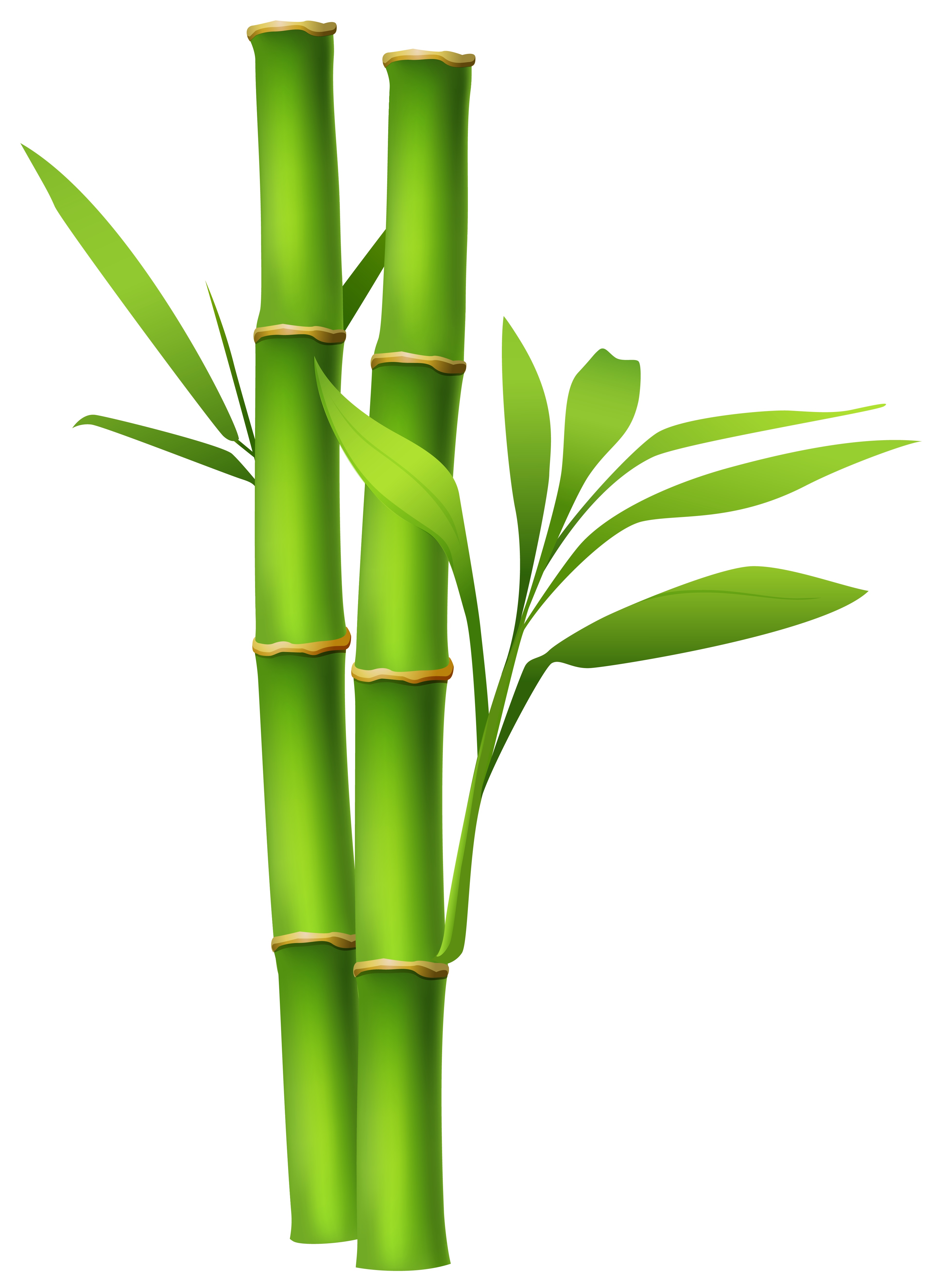 Bamboo clipart High Quality and Gallery Image