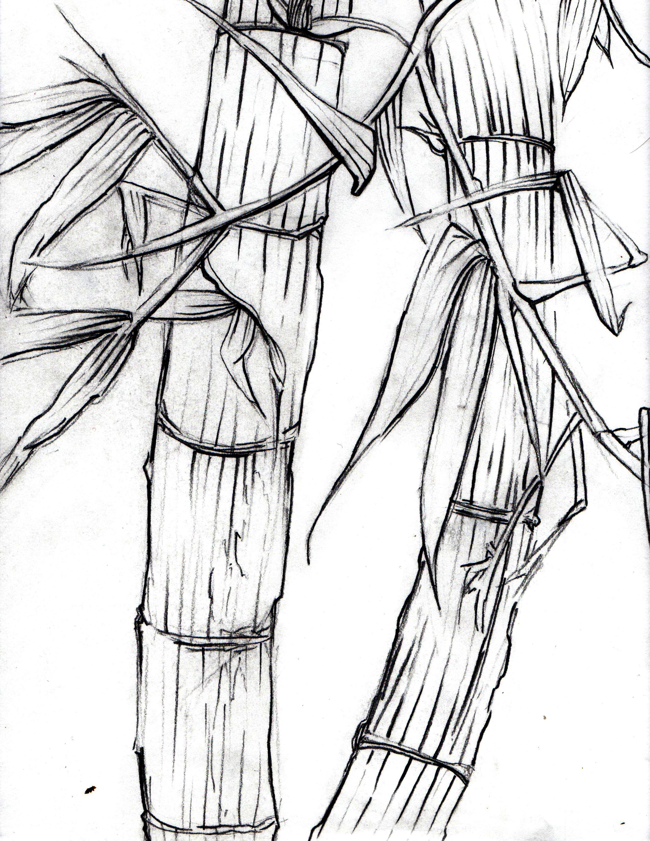 Bamboo clipart japan Talks Line Contour Jesse Drawing