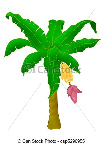 Banana clipart banana tree Tree tree Stock Illustrations banana