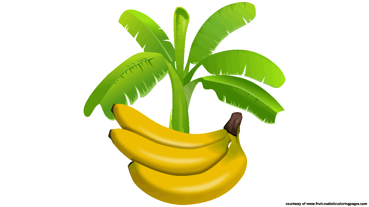 Banana clipart banana tree Amazing Download Fruit tree black