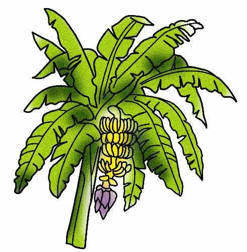 Banana clipart banana tree Download Clip Of Tree Clipart