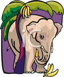 Banana clipart elephant Image: Elephant An Clipart Free